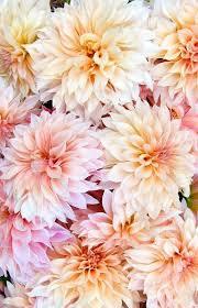 Flowers Of The Month List - best 25 flowers ideas on pinterest pretty flowers flower
