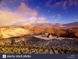 snow covered christmas tree farm in the blue ridge mountains north