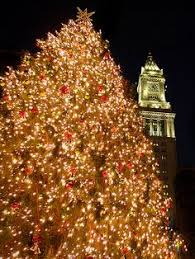 christmas tree lighting boston 2017 boston common christmas tree boston common christmas tree and