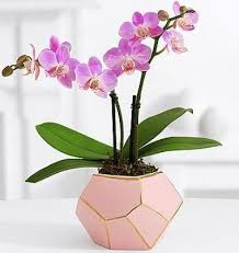 Best Plant For Office Desk What Are The Best Plants To Keep On Your Office Desk Quora