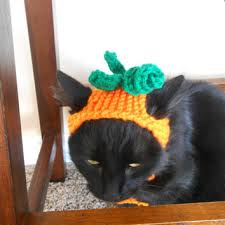 Pet Cat Halloween Costume Knit Cat Hat Knit Pumpkin Hat Cat Gigiandjenna Etsy