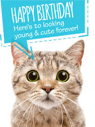 Cat Birthday Cards To Look Young Cute Funny Birthday Card Birthday Greeting