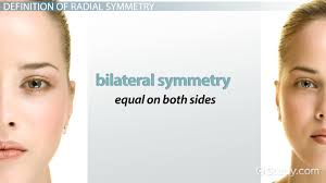 radial symmetry in biology definition u0026 examples video u0026 lesson