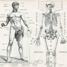 Human Anatomy Skeleton Diagram Anatomy Organ Pictures Human Anatomy Bones Images Collection