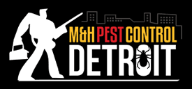 Bed Bug Exterminator Detroit The Best Extermination Team Detroit Michigan Has To Offer Top