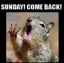 Monday Funny Meme - sunday come back quotes quote days of the week monday quotes happy