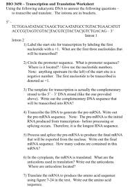 bio 3650 transcription and translation worksheet chegg com