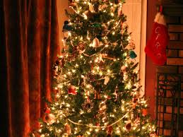 5 places to buy christmas trees in needham needham ma patch