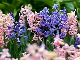 Spring Garden Ideas High Res Flower Photo Spring Garden By Naruto11111111 On Deviantart