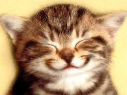 Smiling Cat Meme - what cat meme are you playbuzz
