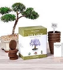 nature s blossom bonsai garden seed starter kit