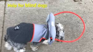 Halo For Blind Dogs Muffin U0027s Halo For Blind Dogs Youtube