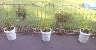 lovable 5 gallon bucket vegetable garden bucket container planting