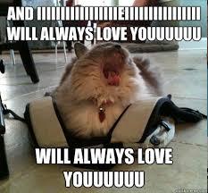Love You Memes - always love you cat memes quickmeme