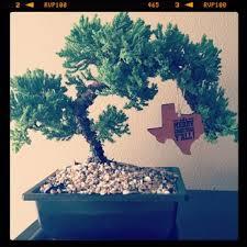 miniature trees 27 photos 36 reviews nurseries