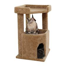 Cat Gyms Amazon Com Cat Condo Corner Kitty Furniture For Large Cats With