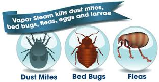 What Kills Bed Bug Eggs Does Steam Cleaning Kill Dust Mites Fleas And Bed Bugs U2022 Vacuum