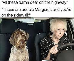 Funny Old Lady Memes - funny pictures of the day 35 pics