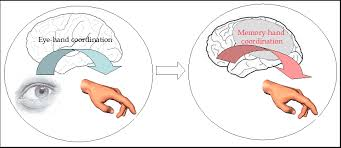 What Is Congenital Blindness Learning Based Cross Modal Plasticity In The Human Brain Insights