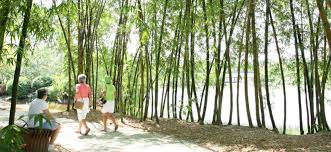 colorado u s japanese gardens the most amazing gardens in miami and south florida wheretraveler