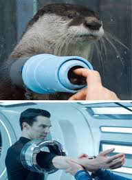 Cumberbatch Otter Meme - omg laughing so hard right now fandom business pinterest