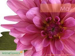 The Month Of June Flower - april flowers wallpaper wallpapersafari