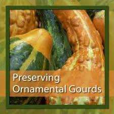 growing beautiful ornamental gourds gourds gardens and plants