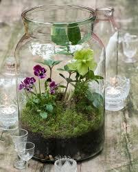 download unique terrarium ideas solidaria garden