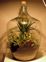 sealed bottle garden how to make a bottle garden contentzza com