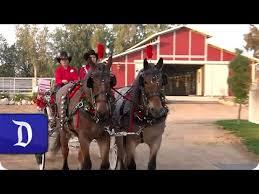 When Is The Parade Of Lights Disneyland Resort Horses Appear In Horsetown Parade Of Lights In