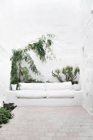 1124 best climbing indoor plants images on pinterest plants