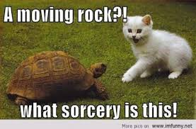 Moving Meme Pictures - a moving rock what sorcery is this funny tortoise meme picture