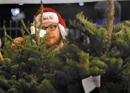 real or fake drought intensifies debate over christmas trees u0027 eco