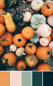 fall pumpkins background pictures best 25 fall color palette ideas on pinterest fall color