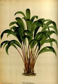 Tropical Plant Biology - 13 best clip art tropical leaves images on pinterest tropical