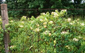 trees are also native plants escape of the invasives top six invasive plant species in the