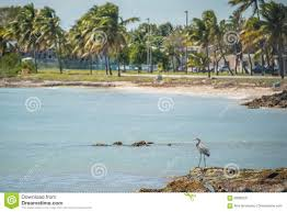 beautiful beach and ocean scenes in florida keys stock photo