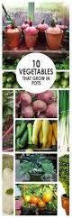 top organic garden fertilizers you can make organic fertilizer