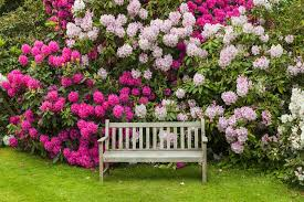 Fertilizer For Flowering Shrubs - how to care for and when to fertilize rhododendrons your market