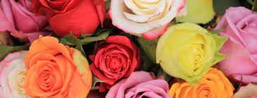 Colored Roses The Color Language Of Roses Official Blog Of Jackson U0026 Perkins