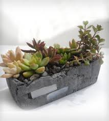 Succulent Planter by Rectangular Succulent Planter Home Design Styles