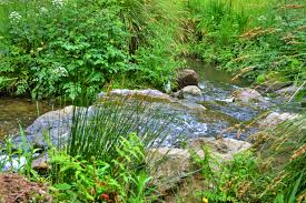 free images waterfall creek plant flower river stream