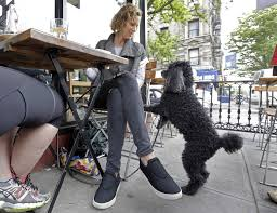 Dog Patio Dogs On Restaurant Patios Bill To Allow It In Michigan Is Back