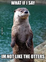 Sea Otter Meme - fabulously pissed off otter as a meme anyone otters pissed and meme