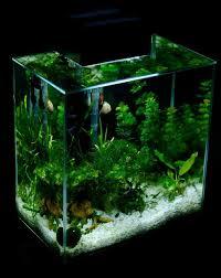 Okeanos Aquascaping 59 Best Aquascapes Images On Pinterest Aquarium Ideas