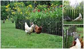 2015 the garden roof coop community chickens