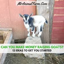 cost to feed goats how much does a goat cost mranimal farm