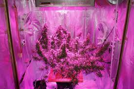 Led Grow Lights Cannabis Growing Cannabis Easily With Led Grow Lights Expert Home Grower