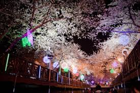 jinhae cherry blossom festival festivals un and blossoms