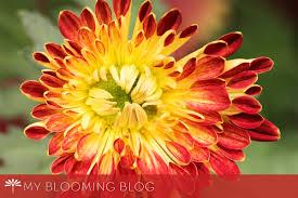 blog floating petals inspirational blog about flowers tuesdays blog